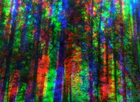 Prismatic Forest